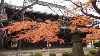 【東京・世田谷区紅葉狩 2016】 豪徳寺は、曹洞宗の寺院で、彦根藩主、...