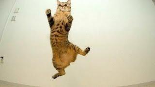 Смешные Кошки - Неудачные Прыжки. Сборник [NEW HD]
