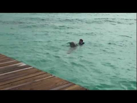 Anguilla swim with dolphins1