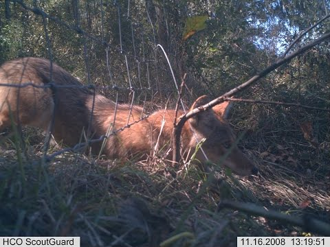 Extraordinary Animal Behavior on Trail Camera