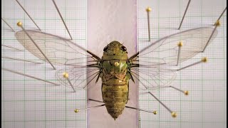 How to Pin a Cicada