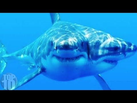 10 Sea Monsters