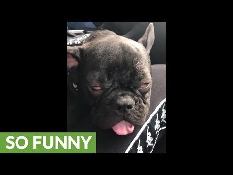 Heavily sleeping dog experiences intense dream