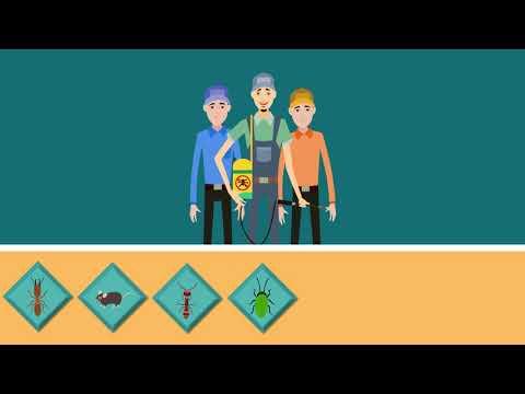Mesa arizona best pest control - (888) 504-4737 Mesa pest control - responsible pest control Mesa az
