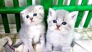 КОТЯТА ИГРАЮТ ОНЛАЙН. СТРИМ с маленьким котенком и Вопрос-ответ