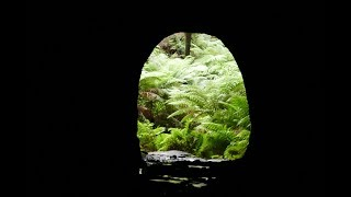 A Day of Adventures in Glow Worm Tunnel - New South Wales 11/2015
