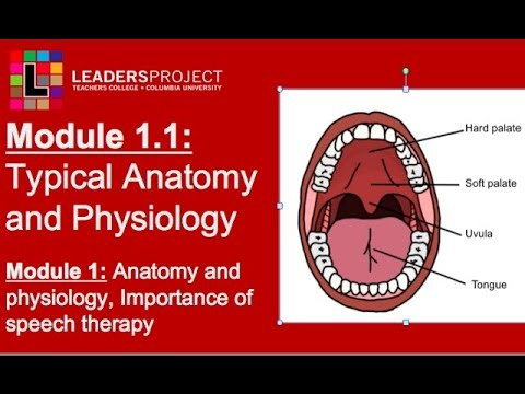 Module 1.1- Cleft Palate Speech and Feeding: Importance of Speech ...