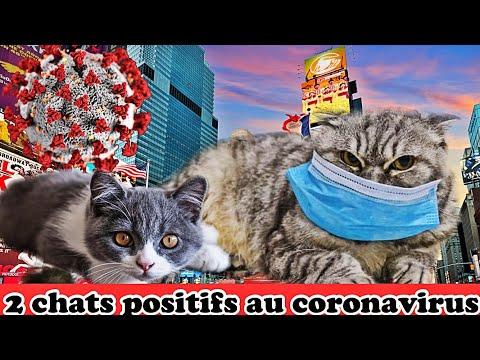 Deux Chats contaminés au Coronavirus à NewYork #covid19