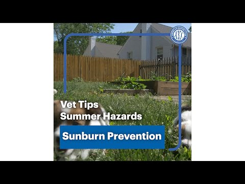 Vet Tips | Sunburn Protection - Summer Hazard
