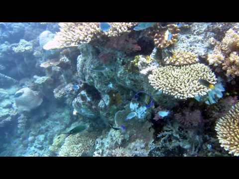 Fiji soft coral snorkeling