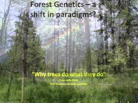 Forest Genetics - A Shift in Paradigms? - session 1