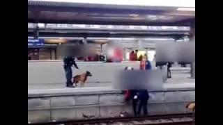 Polizeihund stößt Frau auf die Gleise am Nürnberger Hauptbahnhof  Policedog pushes woman