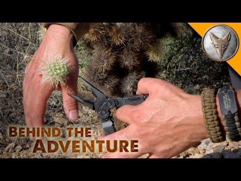 Thumbnail: Ouch! Jumping Cactus Attack!