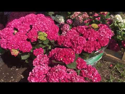Рынок садовод / супер бизнес цветы