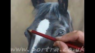 рисунок карандашом лошадь...