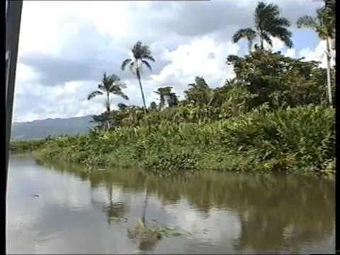 Jamaica   Black River Safari