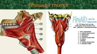 презентация пищеварительная система (ЗБМК)