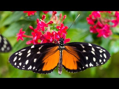 Tropische Schmetterlinge im Botanischen Garten München 2017/18