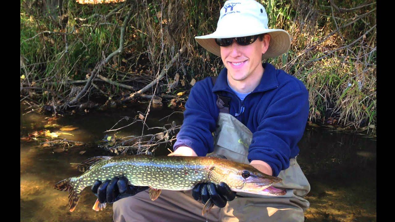 Milwaukee river electrofishing survey fall 2013 youtube for Milwaukee river fishing report