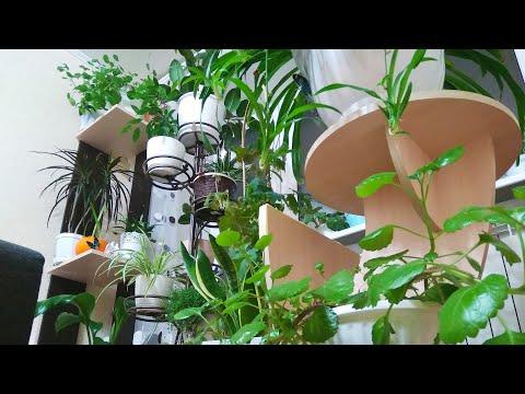Обзор растений в ноябре/расхламление моего подоконника/