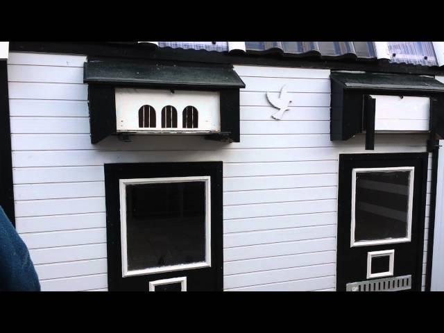 Marokkaanse duivenman in Nederland