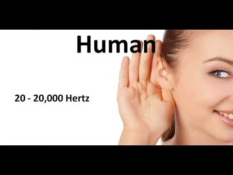 Sound - Audible range of hearing - TNPSC