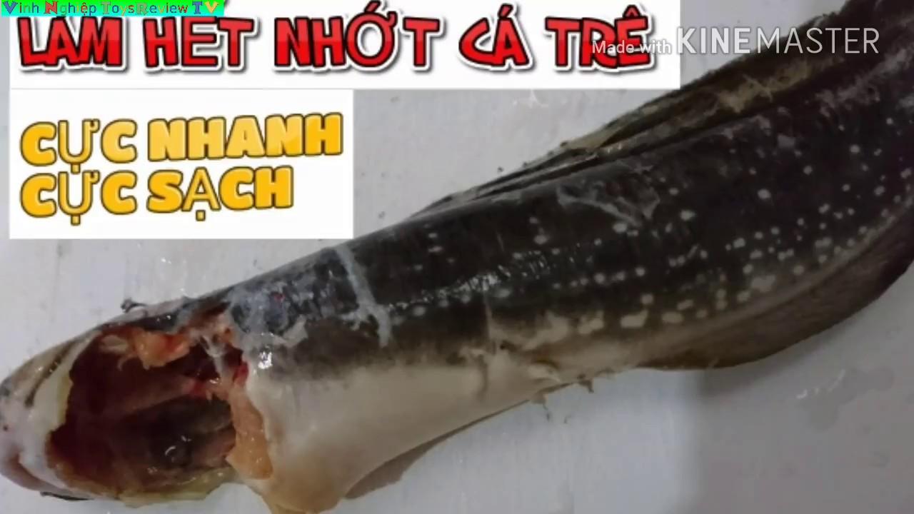 LÀM HẾT NHỚT CÁ TRÊ CỰC NHANH, CỰC SẠCH, CỰC ĐƠN GIẢN | Vietnam Travel |🇻🇳 Cuộc sống Việt Nam