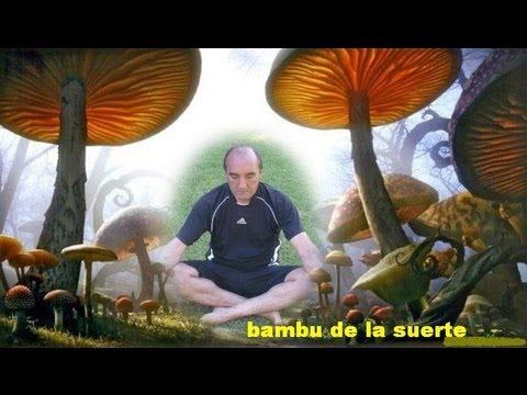 Bambu para la suerte y limpia de casas youtube - La suerte en casa ...