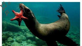 Праздник «Всемирный день океанов» в 2021 году отмечается 8 июня