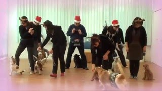 ドッグスクール『Fun with Dog club』のみんなと昨年もクリスマス会をし...