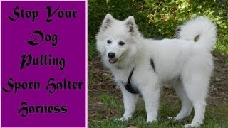 Stop Your Dog Pulling -the Sporn Harness