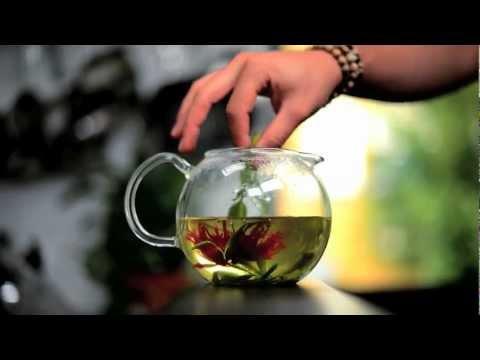 James Wong  Homegrown Tea Plants from Suttons Seeds