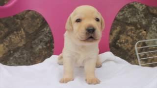 http://passerellewan.jp/puppies/?type=35.