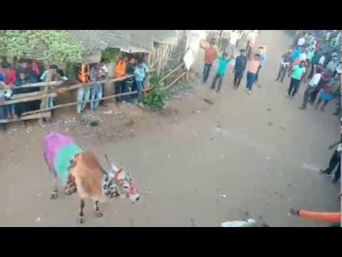 Hori Habba_kappanahalli Hori Habba_bull Catching Video_kobbari Hori_bull Catch Video_hori Haba 2019.