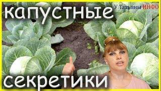 КАПУСТНЫЕ СЕКРЕТЫ – как получить хороший урожай КАПУСТЫ...