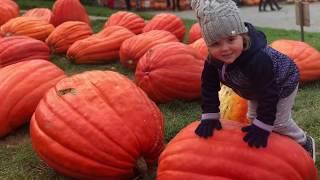 A day at Howells Pumpkin Farm