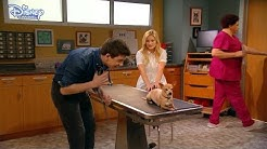 I Didn't Do It   The Checkup 🐾   Disney Channel UK