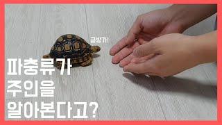 파충류는 정말 주인을 알아볼수 있을까?