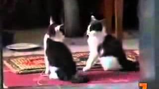 топ 10 приколов про кошек