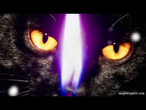 The Feline Presence and The Black Cat