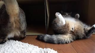 まるとはな24。-Maru&Hana 24.- thumbnail