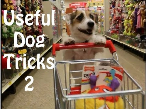 Thumbnail: Useful Dog Tricks 2 performed by Jesse the Jack Russell Terrier