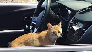 차 안에 들어간 눈치 100단 고양이