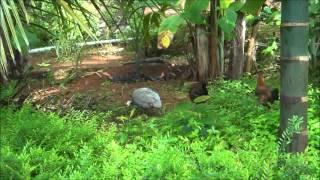 Namastey Farm House - Gokarna (Karnataka)