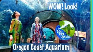 Oregon Coast Aquarium: Window of Wonder into the Magnificent Undersea World