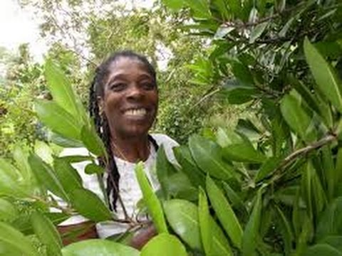 ISRAELITES AKHAN MAROON HERBAL ANCIENT MEDICINE FOR BLACK CONSCIOUS COMMUNITY NEWS10
