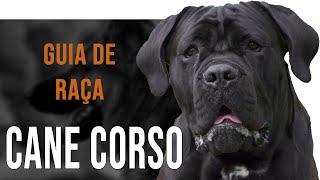 CANE CORSO - Tudo sobre a raça(, 2018-10-16T16:00:03.000Z)