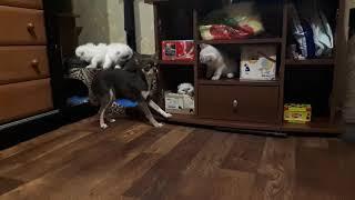 Любимые котята