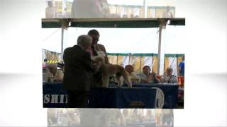 Blackpool Ch Show Terrier Group Trailer