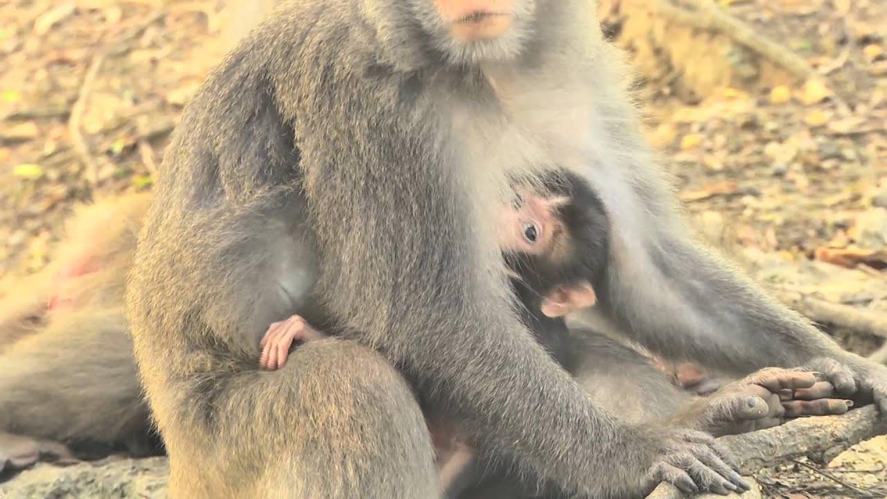 高雄壽山獼猴-嬰猴篇 - YouTube